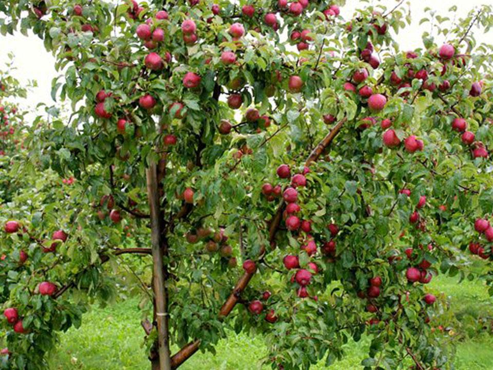 Betty Kennedy Dried Fruit