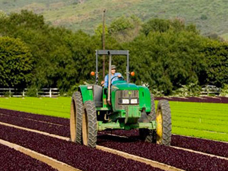 Scarborough Farm
